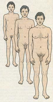 Развитие мужских половых органов