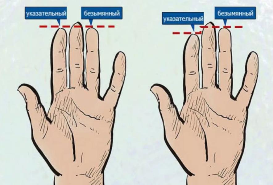 Разница между указательным и безымянным пальцем