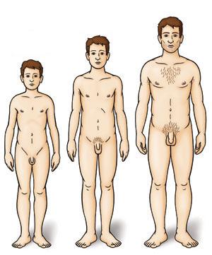 Длина пениса 16, 17, 18 см. Много или мало?