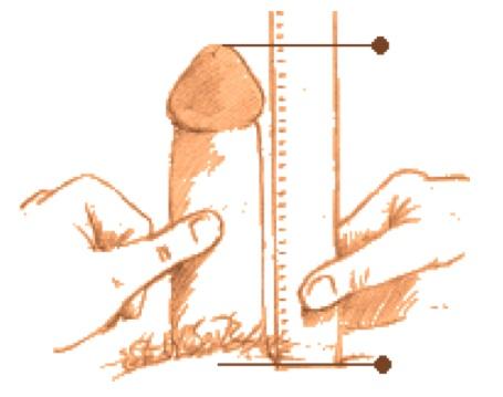 какой размер члена нравится женщинам Петров Вал