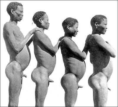 Как долго развивается половой орган