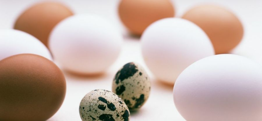 Польза перепелиных и куриных яиц для потенции: рецепты коктейлей