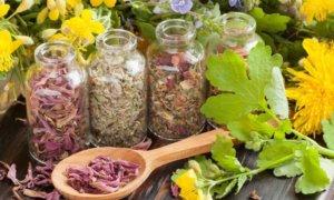 Самые эффективные рецепты лекарств из трав от простатита